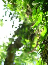 leaves-190