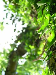 leaves-188[1]